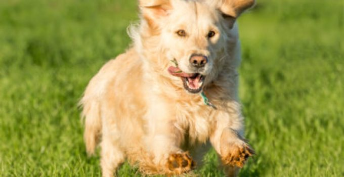 How To Train A Dog With A Shock Collar To Stay In The Yard?
