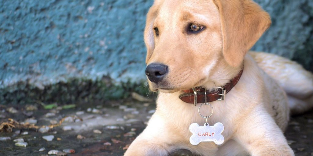 Where To Put Tag On Dog's Collar?