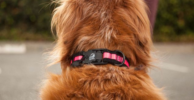 How Many Fingers Under my Dog's Collar