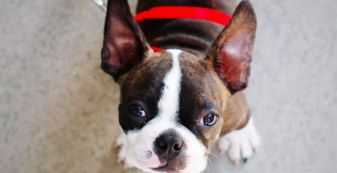 6 BEST DOG TRAINING COLLAR FOR SMALL DOGS