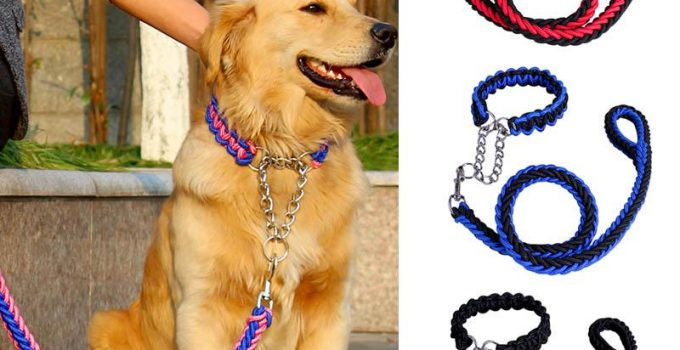 6 Best Leash for Training a Dog to Walk